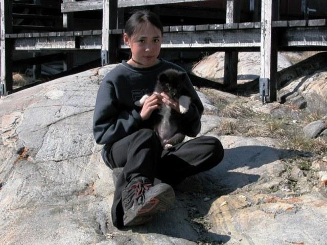 slædehunde som hvalp